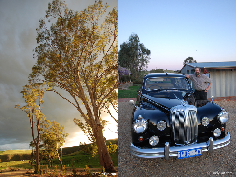 Barossa Daimler Tours_Cindy Fan